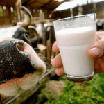 Мясо и молоко в России подорожают на 12%
